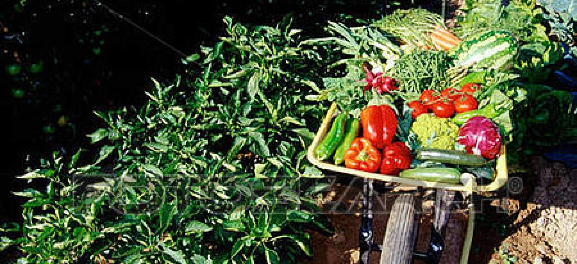 الحد من استخدام المبيدات والأسمدة الكيماوية في الزراعة بريف المنطقة الشرقية من محافظة خانيونس'