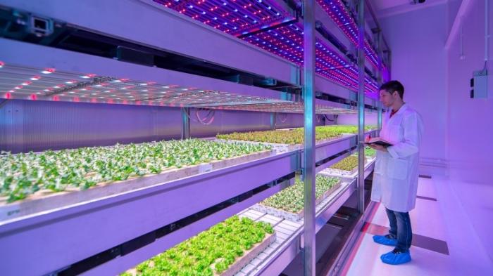الزراعة الحديثة واستغلال المباني