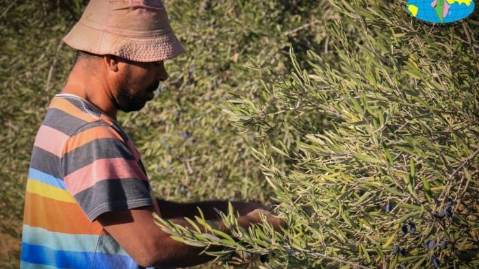 عدسة مركز خزاعة للزراعة المستمرة