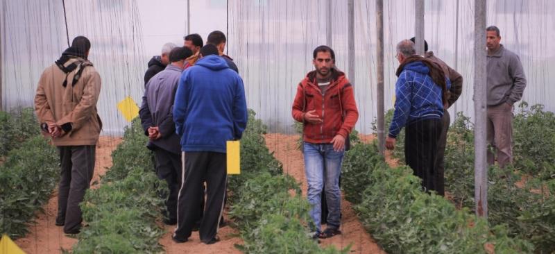 تنفيذ تشجيع الانتاج العضوي من خلال انشاء موقع مشاهدة  في محافظة خانيونس
